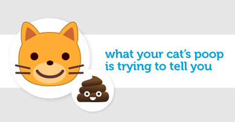 The Real Scoop: What is Your Cat's Poop Telling You?