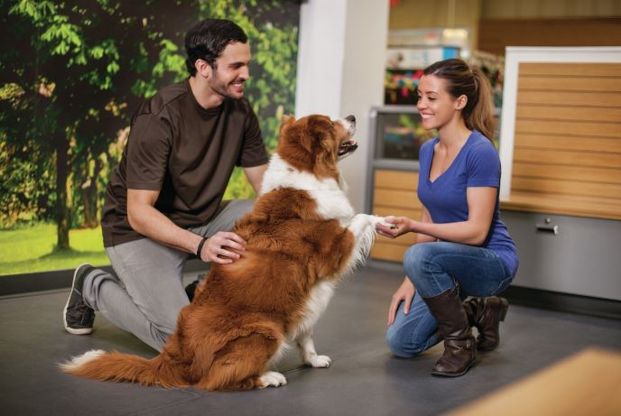 Positive Dog Training and Dog Obedience Training from petco.com