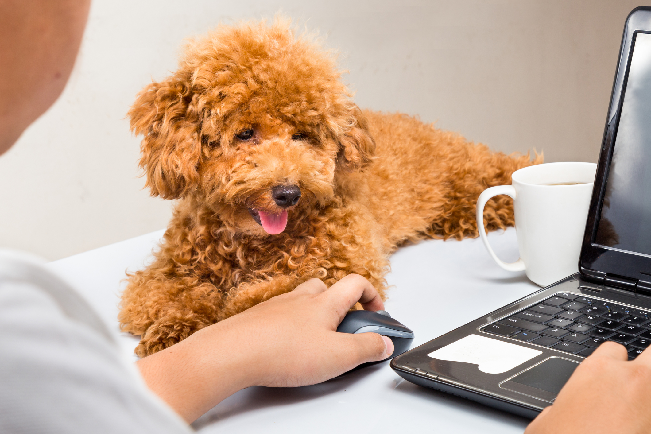Office Dogs Can Lower Stress & Bond Employees